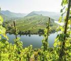 5 dagen 'Wandelen en Wijn aan de Moezel en de Rijn'