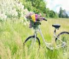 5-daagse fietsvakantie in de Veluwe